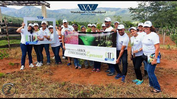 Despacho Legal celebra 11 años con jornada de reforestación