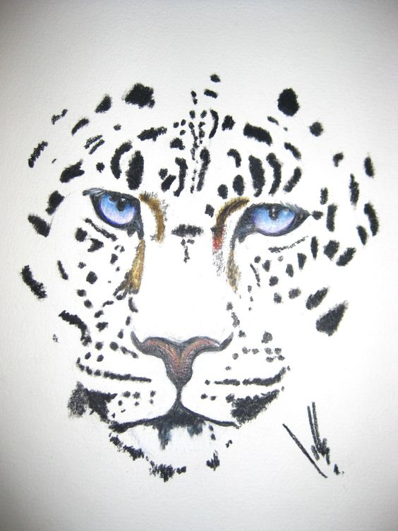 Leopard Pencil Drawings Pinterest • The worl...