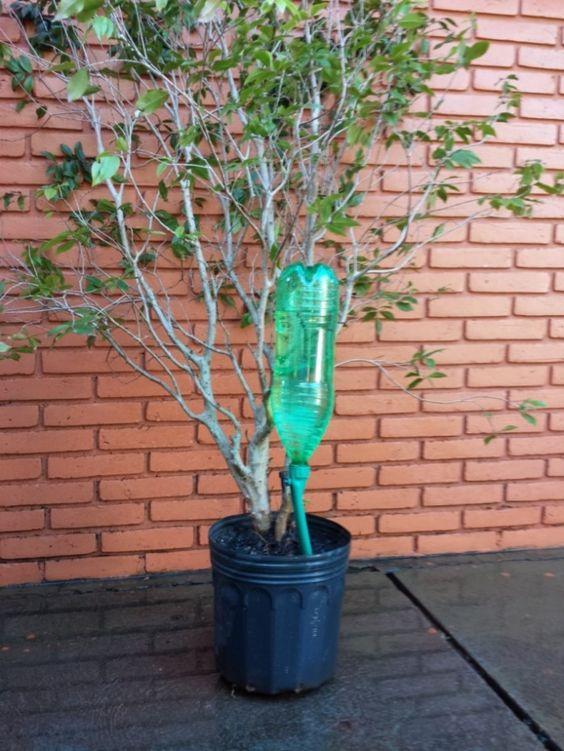 Gotejador acoplável em garrafa pet Petgotta - Acqua Vitta Floral