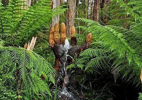 Waterfall Hand, Australia