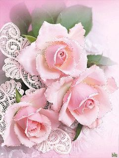 pink roses: