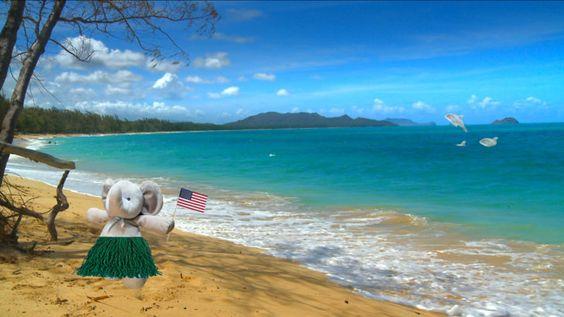 Conociendo Hawái. Y se pasó a Hawái para disfrutar de su cálido sol. Niño pierde su juguete favorito, sus padres le dicen que se fue de viaje; e Internet los ayuda