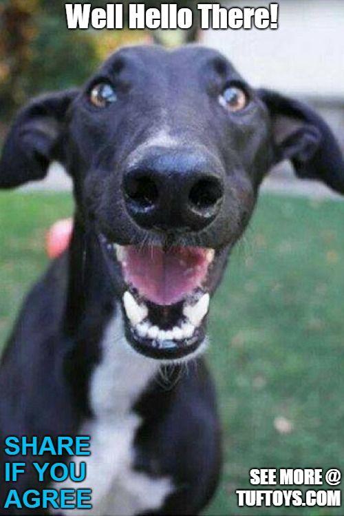 Funny Dog Memes Part 3 Funny Dog Memes Happy Dogs Funny Dog Memes