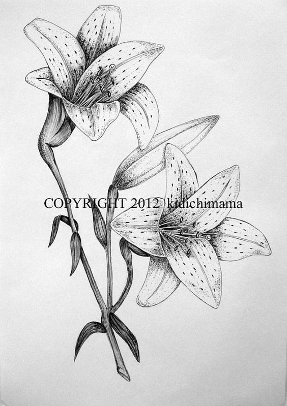 Original pen and ink tiger lily drawing on white paper ...