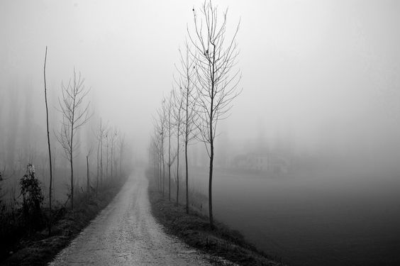 Landscape, avenue country, poplars, rural house, fog, Po Valley, northern Italy.