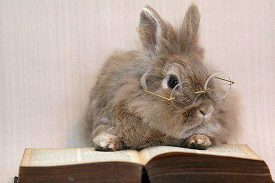 I Very Much Like This Peter Rabbit Character