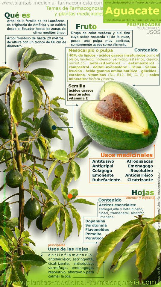 Propiedades y usos medicinales del aguacate