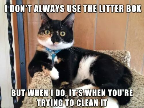 Collection Of Funny Cat Memes 2019 Funny Cat Images Kitten Mom Funny Cat Memes