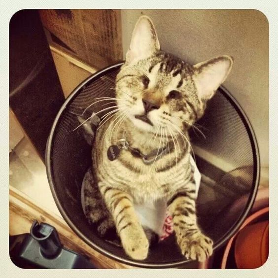 Adopt A Less Adoptable Pet Week Meet 9 Cats Who Found Amazing