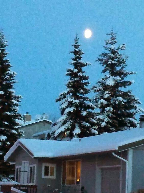 Pinos cibiertos de nieve