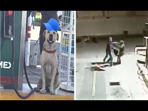 Stray Dog Adopted By Gas Station Rushes To The Rescue During Armed Robbery Dogs Puppies Animal Shelters Near Me Dogs Rescue Dogs