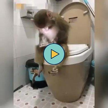 o macaco esta ocupado
