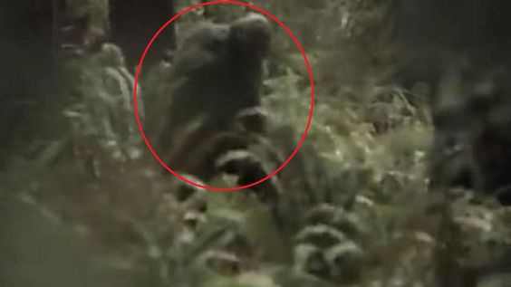 Bigfoot Attacks Travelers In The Mountains Of Vermont | The Fortean Slip