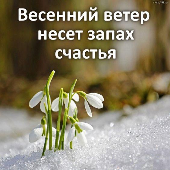Весенний ветер несет запах счастья  #весна #подснежники #природа #счастье #романтика