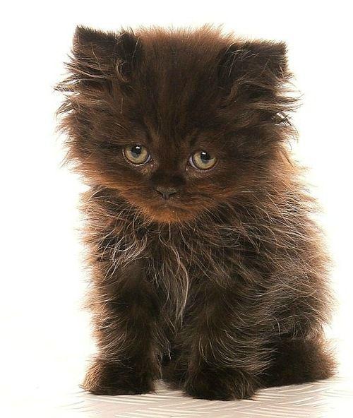 Sad, Kitty and Forgive me on Pinterest