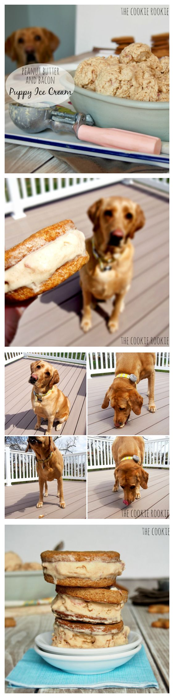 Peanut butter bacon puppy ice cream recipe bacon dog for Dog ice cream ingredients