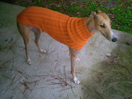 Knitting Patterns For Greyhound Dogs : Ravelry: Project Gallery for Side Button Greyhound Sweater pattern by Terri L...