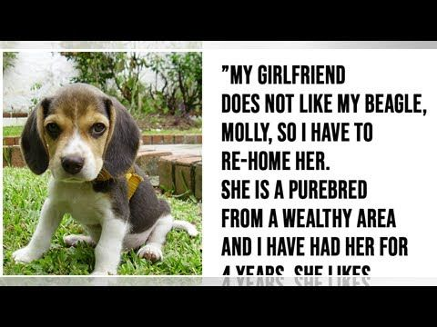 Girlfriend Gives Partner Ultimatum Me Or The Dog His Response