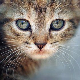 ~ cat ~
