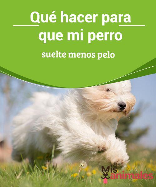 Qué Hacer Para Que Mi Perro Suelte Menos Pelo Mis Animales Perros Entrenamiento Perros Protectora De Animales