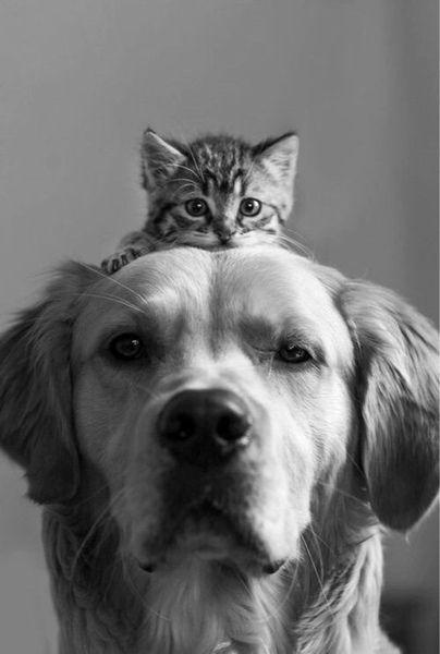 Comme chien et chat <3