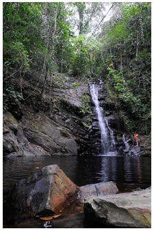 Belize's rain forest