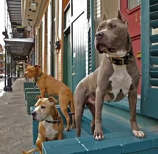 """https://www.facebook.com/TiaMariaTorresOfPitBullsParolees?fref=nf We are extremely grateful for what we've acquired through having a successful, REAL reality show. Now in our 6th season we have been able to survive & save more dogs than ever. What is also important is that we've been able to show that being the """"underdog"""" is about being strong, resilient, tenacious, loyal & forgiving. I think I just described some of greatest dogs in my life.  Bite Me, Tia Maria Torres"""