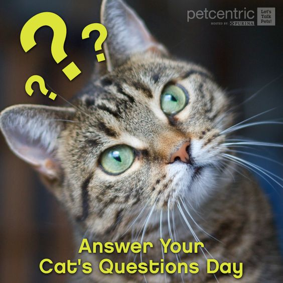 Repin this if you plan on answering your cat's meows today! #AnswerYourCatsQuestionsDay #JoyofPets