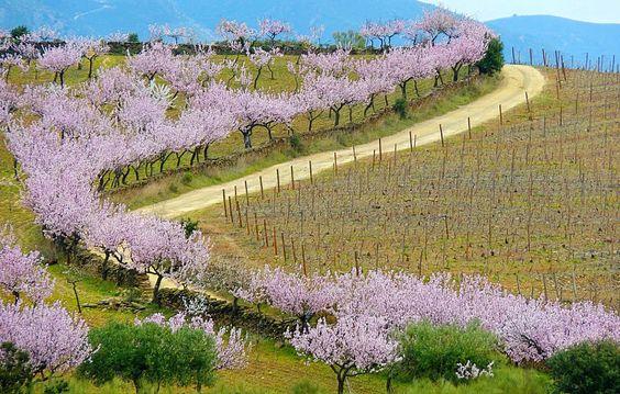 Durante os meses de Fevereiro e Março as amendoeiras em flor proporcionam um espectáculo de cores que se estende pelos vales do Douro.: