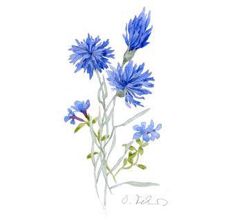 https://colonialarmory.files.wordpress.com/2014/07/scabal_cornflower.jpg