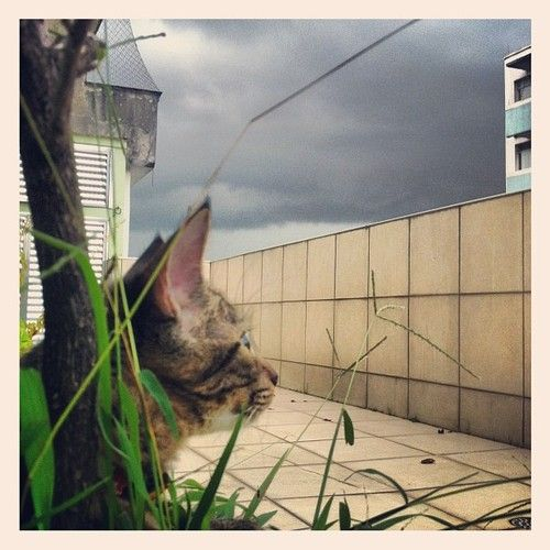Lizzy de olho no céu #cat #dark #sky