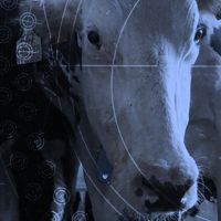 The Ghosts in our Machine | A cinematic feature length documentary that illuminates the lives of individual animals living within the machine of our modern world.
