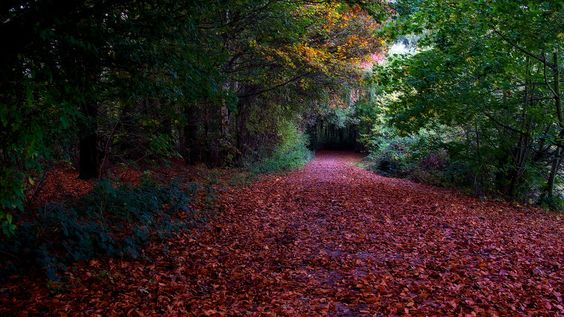 """John """"flick"""" Purchase. Late afternoon capture of my favourite autumn view inside Colwick Park."""