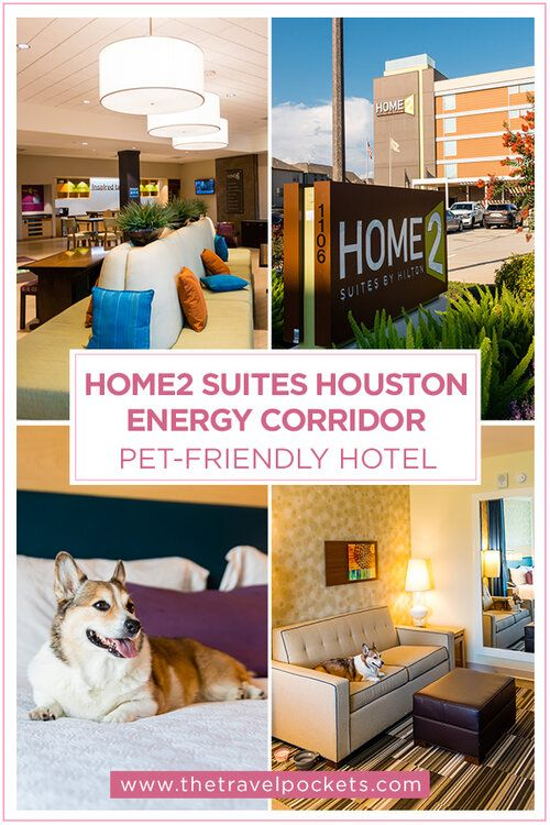 Clean And Modern Rooms At The Pet Friendly Home2 Suites Energy Corridor In Houston Texas Travel Pockets Pet Friendly Hotels Travel Accommodations Travel Size Products