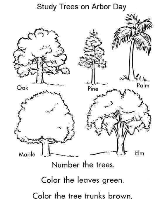 Picture Of A Tree To Color