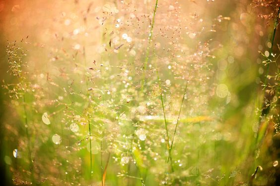 Drops and Sun by Muriel L