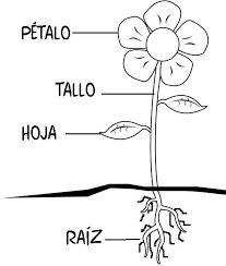 Resultado de imagen de partes de una planta para colorear
