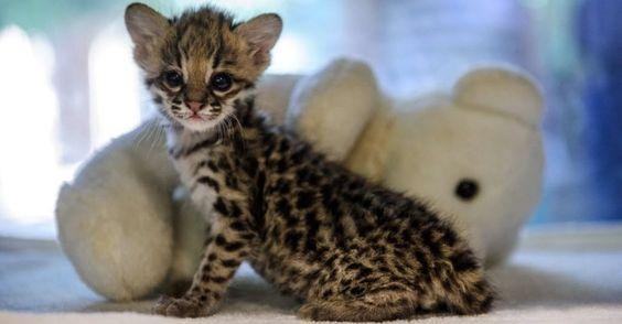 filhote de gato - Pesquisa Google