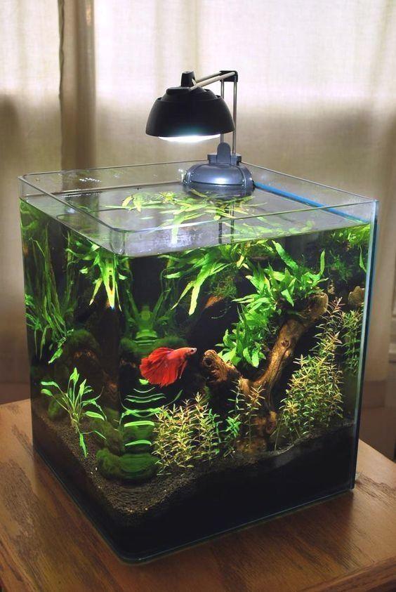 11 Decorer Un Petit Aquarium Voici Un Peu D Inspi 20 Idees A Little Inspiration To Decorate A Small Aq In 2020 Betta Fish Tank Betta Aquarium Amazing Aquariums
