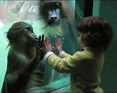 Ação Pelos Direitos dos Animais: Pelo fim dos zoológicos e aquários no mundo