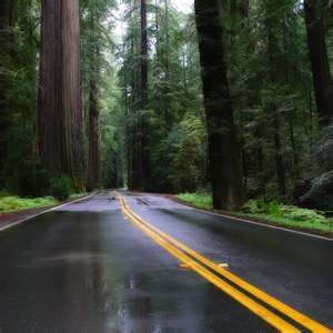 sequoia trees~ this looks very peaceful