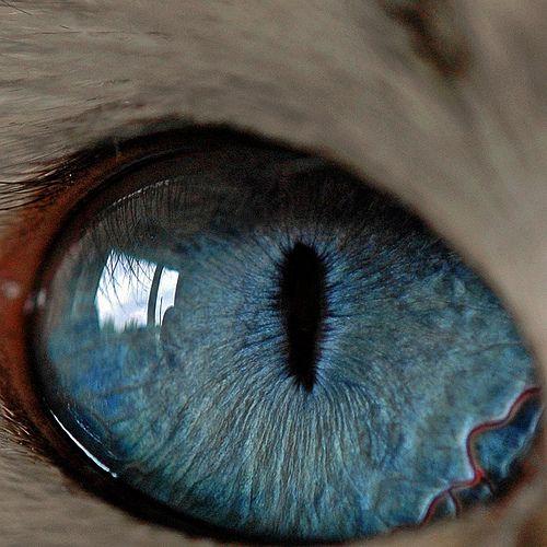 ~cat's eye~