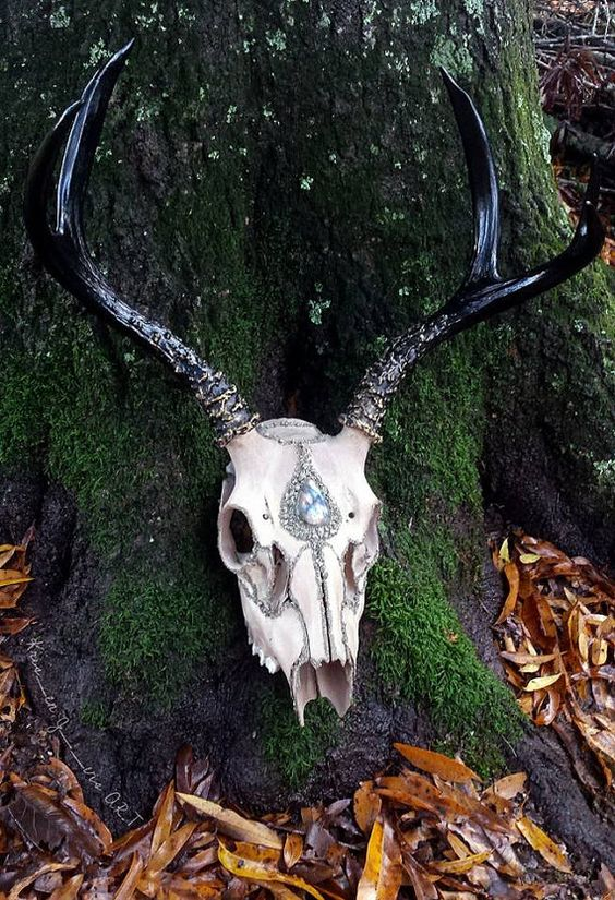 This 5 point deer skull has been stained with a various mixture of teas. It is beautifully gilded with pyrite and adorned with a flashy