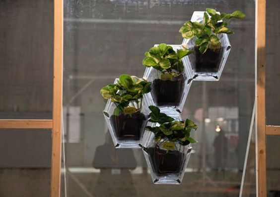20120904_aup0053_ jardins de janela