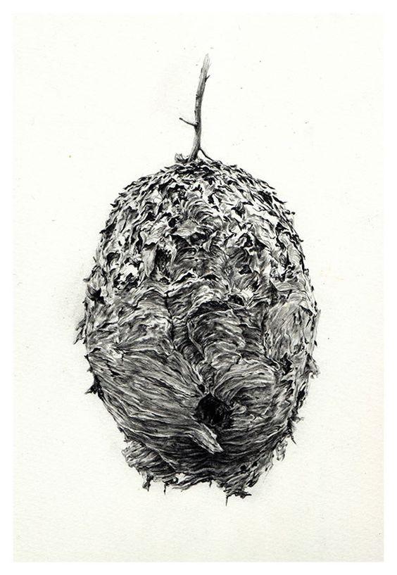Rupert Smissen: www.folioart.co.uk/illustration/folio/artists/illustrator/rupert-smissen - Agency: www.folioart.co.uk - #illustration #art #pencil #nest
