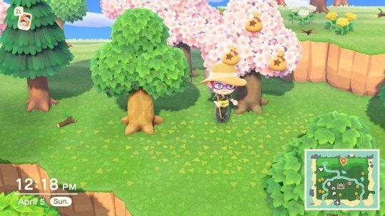 In Animal Crossing New Horizons Money Really Does Grow On Trees Money Trees Animal Crossing Cedar Trees