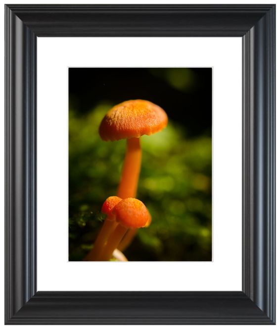 "11"" x 14"" Traditional Photography Prints / Wall Décor Nature Photograph: Orange Button Top Mushrooms Against Natural Green Background. View all of the stunning Nature Photos by Landscape and Nature Photographer Melissa Fague at:  https://www.etsy.com/shop/PIPAFineart Limited edition fine art nature photography prints and canvas wraps are also available in a variety of sizes."