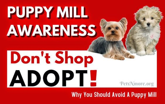 Pets N More: Why You Should Avoid Puppy Mills