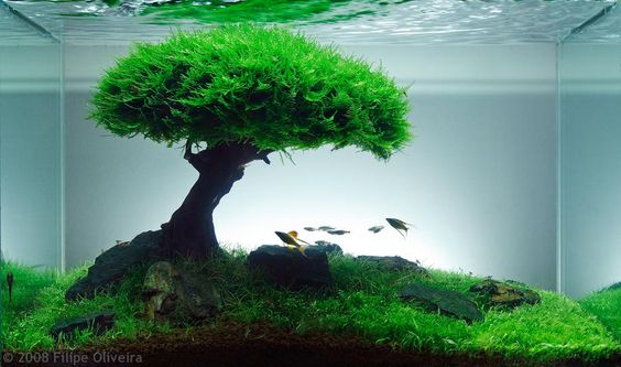 This would be awesome for the goldfish tank or either beta tanks!