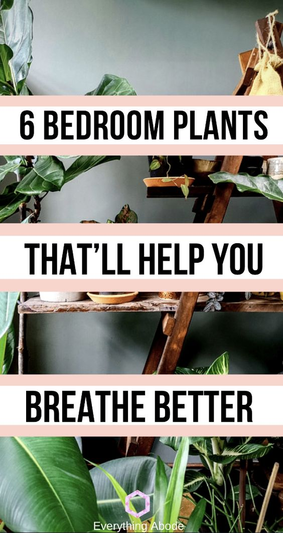 Best bedroom plants to help you breathe better while you sleep at night!